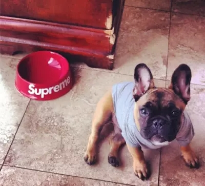 comedero perros supreme