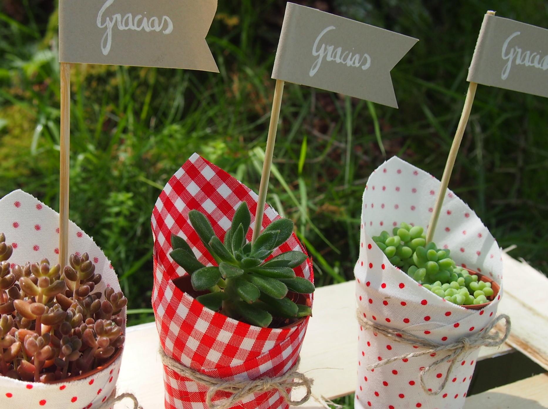 Plantas decoradas como regalo de boda con papeles vistosos