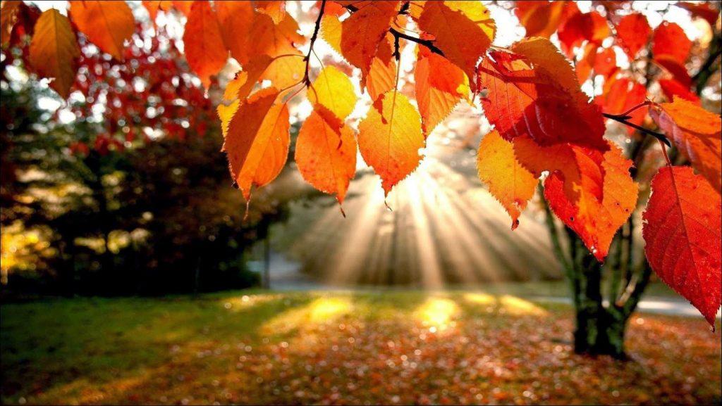 otoño-hojas