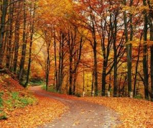 Colores y tendencias para la ropa de este otoño 2020